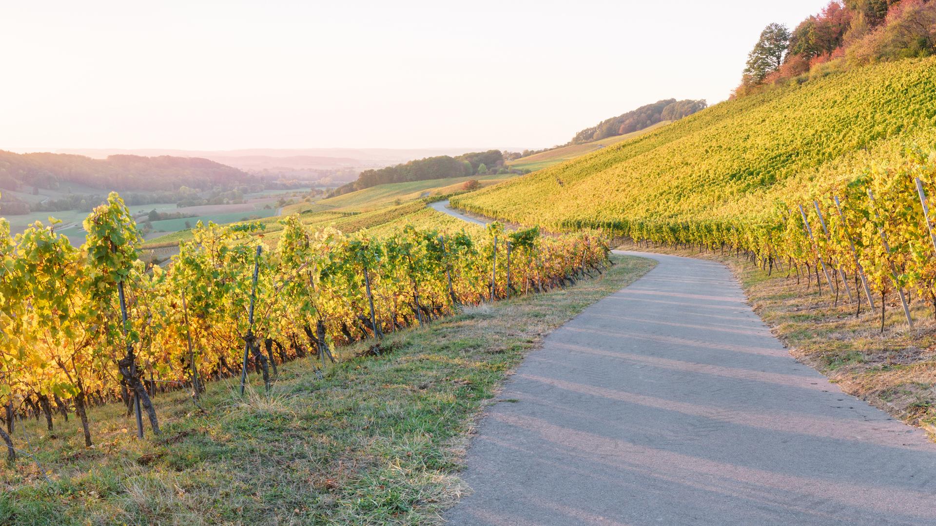 Vignes bordelaises- Notre Philosophie - La Compagnie des Grands Terroirs
